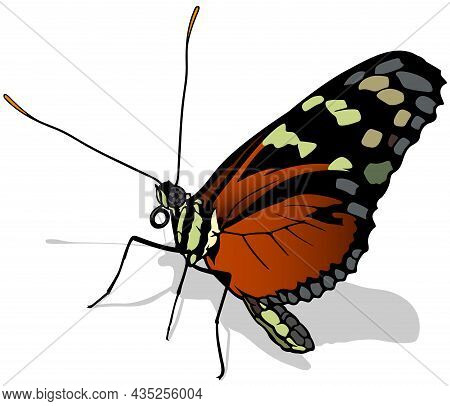 Monarch Butterfly Profile - Beautiful Colorful Butterfly Danaus Plexippus Isolated On White Backgrou