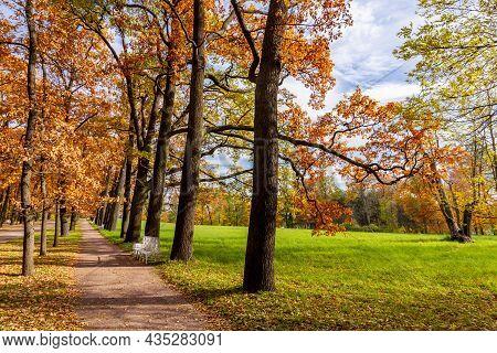 Oak Alley In Catherine Park In Autumn, Tsarskoe Selo (pushkin), Saint Petersburg, Russia