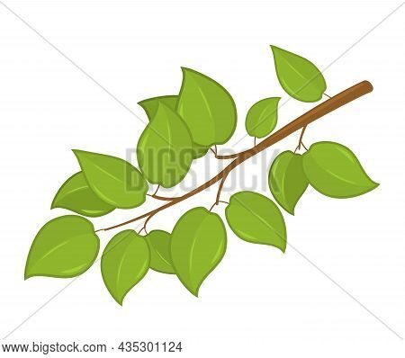 Branch With Green Leaves. Garden Concept. Vector Illustration Isolated On White Background