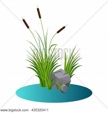 Cattails Bush Reeds With Stones On The Water Vector. Reeds Stern And Grey Stones In The Lake Water C