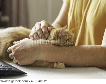 Man In Yellow T-shirt Strokes Cute Ginger Cat. Sleepy Fluffy Pet Purrs With Pleasure. Domestic Anima