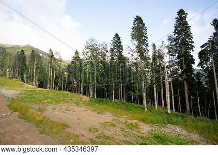 Panoramic View Of A Glade In Summer Forest