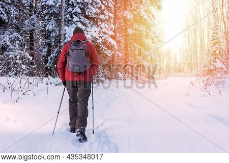 Mature Or Adult Man Hiking And Nordic Walking In Winter Nature. Active People Outdoors. Healthy Life