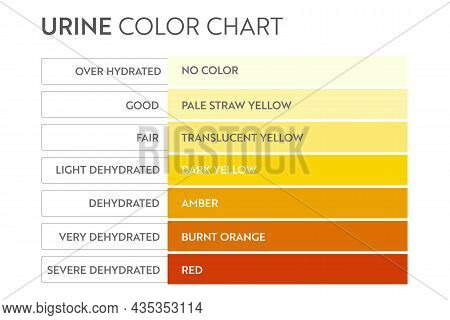 Urine Color Chart. Pee Hydration And Dehydration Test Strip. Vector Design For Medical Education Pos