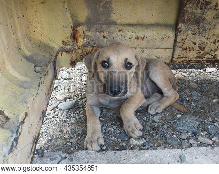 Stray Puppy Hide Under Old Metal Scrape
