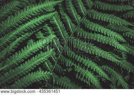 Green Leaves Background. Closeup View Of Green Leaf And Palms. Flat Lay. Creative Nature Backdrop. D