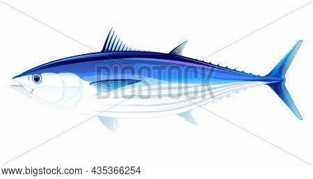 Skipjack Tuna Fish In Side View Illustration