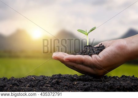 Human Hands Planting Saplings Or Trees In The Soil Global Warming Campaign Concept Conservation Of N