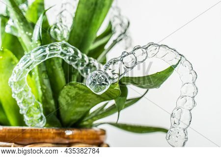 Plastic Braces Dentistry Retainers For Teeth Straightening Hanging On Green Leaves Of Indoor Plant