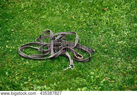 Horse Harness Lies On A Green Lawn Close-up.
