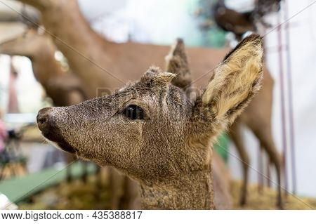 The Roe Deer Head Close Up. Scarecrow.
