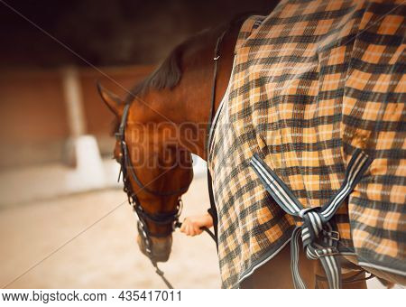 A Rear View Of A Bay Horse Dressed In A Checkered Yellow Blanket, Which A Horse Breeder Holds By The