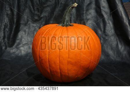 Pumpkin. A orange pumpkin with a black background. Halloween and Thanksgiving Pumpkin.