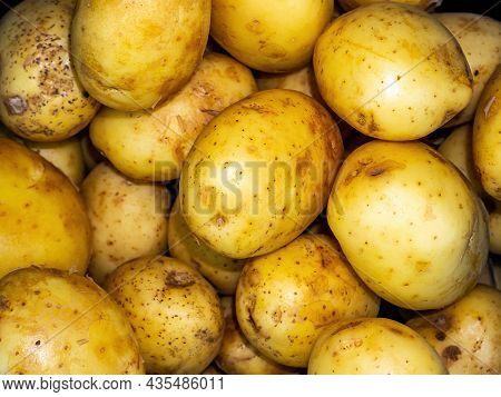 Vegetable Agricultural Crop Of Potato Plant Tubers. Solanum Tuberosum. Raw Vegetable. Healthy Eating
