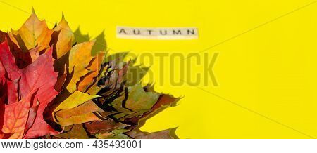 Bright Autumn Leaves Next To Blurred Lettering Autumn Lie On Yellow Background With Copy Space. Text