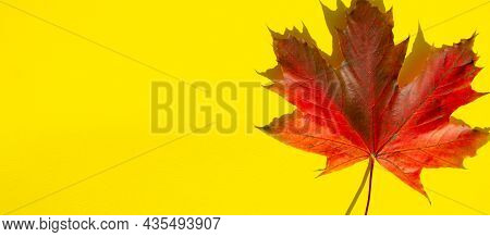 Bright Autumn Foliage Lies On Yellow Background With Copy Space. Texture Of Multicolored Maple Leaf