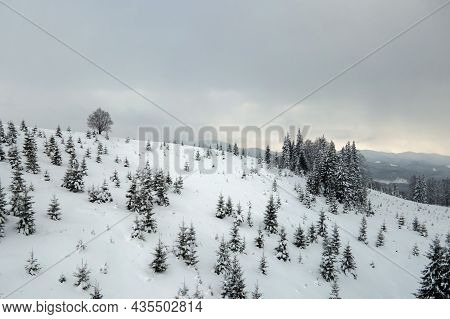 Aerial View Of Winter Landscape With Mountain Hills Covered With Evergreen Pine Forest After Heavy S
