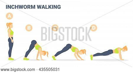 Woman Doing Inchworm Exercise Fitness Home Workout Guidance Illustration. Caterpillar Walk Concept.
