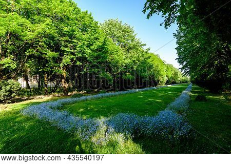 Landscape With Green Trees, Leaves And Grass And Many Small Blue Forget Me Not Or Scorpion Grasses F