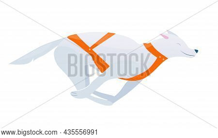 Vector Illustration With Running Sled Dog In Cartoon Style, Winter Sport With Husky On White Backgro