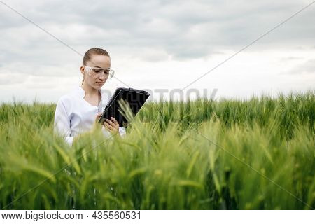 Young Woman Farmer Wearing White Bathrobe Is Checking Harvest Progress On A Tablet At The Green Whea
