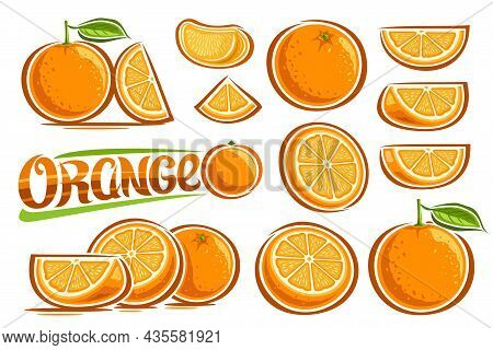 Vector Oranges Set, Lot Collection Of Cut Out Illustrations Fruit Still Life Compositions With Vitam