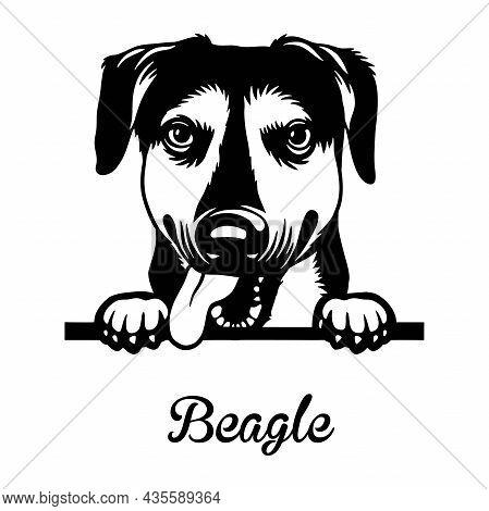 Beagle Peeking Dog - Head Isolated On White