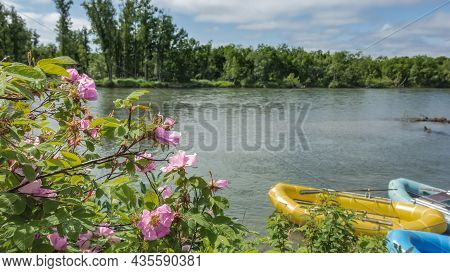 There Are Colorful Inflatable Boats For Rafting On The River. Green Vegetation On The Far Shore. In