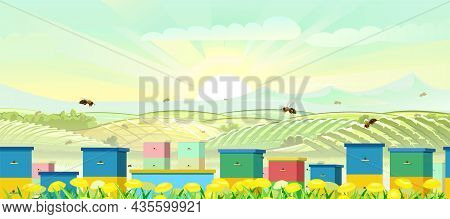 Apiary. Rural Farm Landscape With Bee Hive In A Summer Meadow. Blooming Yellow Dandelions. Pollinati