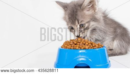 A Kitten Eats Dry Food From A Blue Plate On A White Background For A Pet Shop. The Cat Eats, Place F