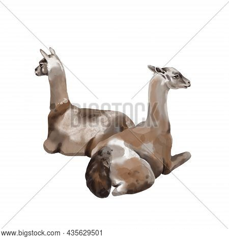 Watercolor Alpaca. Llama High Quality Illustration. Isolated On A White Background