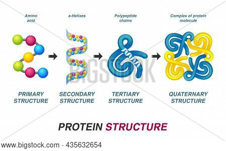 Neuron Communication Concept. Axon Terminal, Synaptic Cleft, Dendritic Spine. Vector Illustration.