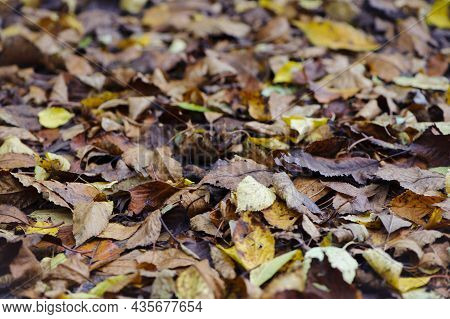 Dry Leaves On The Ground In A Beautiful Autumn Forest. Autumn Background, Fallen Leaves In A Forest