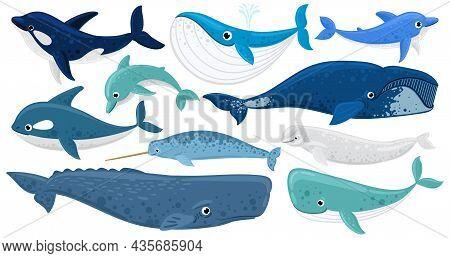 Cartoon Underwater Mammals, Dolphin, Beluga Whale, Orca, Sperm Whale. Marine Animals, Humpback Whale