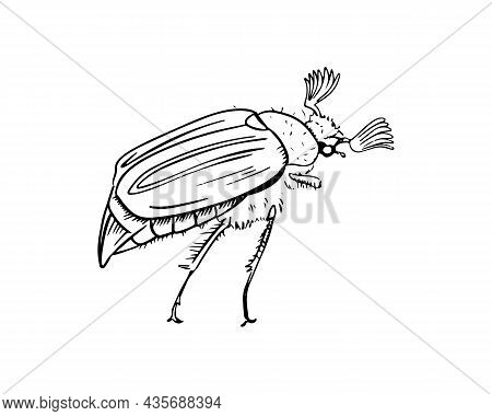 May Bug Hand-drawn In The Style Of Black And White Graphics. Vector Illustration