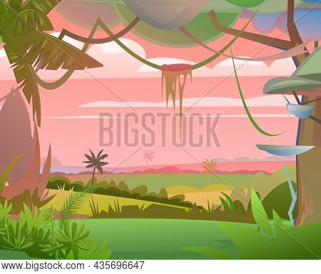 Jungle Plants. Flora Landscape. Dense Thickets. Morning Sunrise Dawn Or Evening Sunset. View From Tr