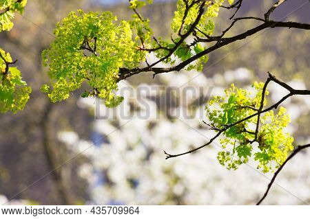 Green Plant In Blossoming Garden. Beautiful Nature Background On A Sunny Springtime Day