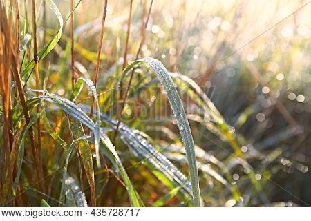 Morning dew drops on autumn grass in beautiful morning sunlight. Close-up. Copy space