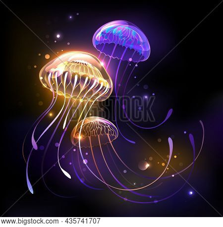 Three, Artistically Drawn, Glowing, Bright Jellyfish, With Long Tentacles On Black Background With P