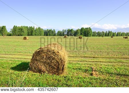 A Rural Field In Summer Under A Blue Sky In The Altai Mountains. Siberia, Russia