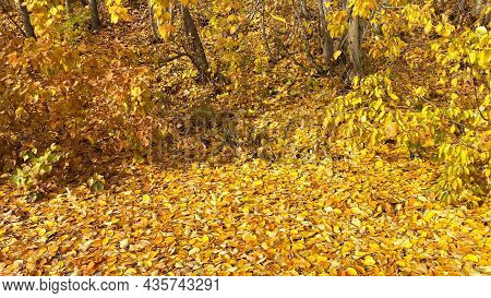 Autumn Landscape With Yellow Leaves. Golden Leaves Falling From Trees On Ground