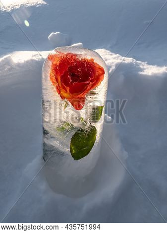Flower In Frozen Water, Rose In Ice In Bright Sunlight With Visible Bubbles. Outdoor Decorations In