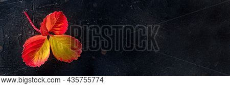 Colorful Autumn Leaf Panorama On A Black Background, Fall Season Panoramic Banner With A Place For T