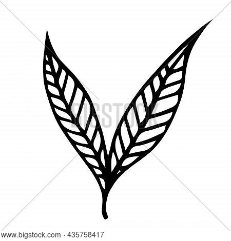 Two Leaves Of Willow On A Twig Vector Icon. Hand Drawn Doodle. Veined Leaf Contour. Black And White