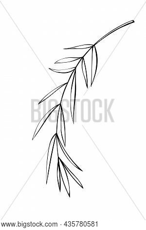 Vector Outline Spice Rosemary Sprig In Doodle Style. Clip Art For Kitchen, Design Of Packaging And W