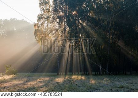 Sun Beams Penetrating In The Fog Through The Branches Of Birches Growing On The Edge Of Glade In Par