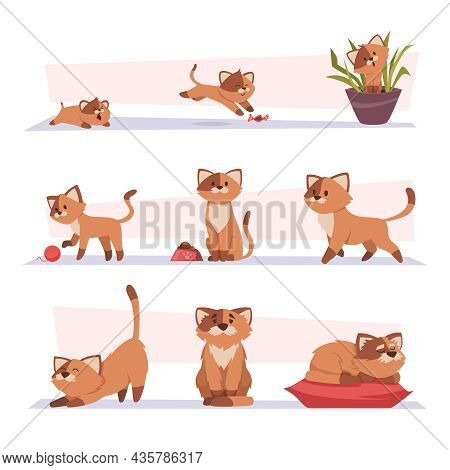 Growth Cat. Kitten Playing Pets Stages Growing Domestic Animal Exact Vector Cartoon Characters
