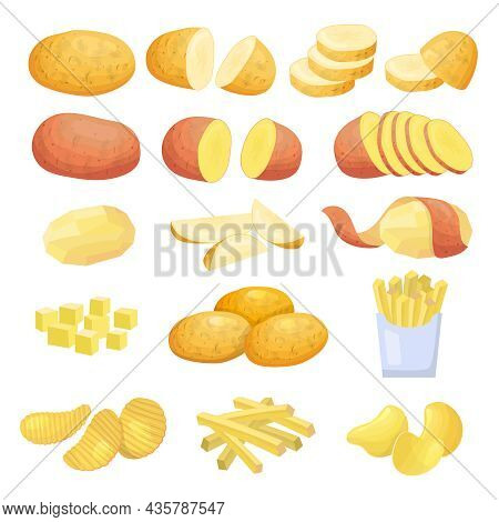 Natural Potatoes. Natural Plants Sliced Vegetables Round Potatoes Recent Vector Colored Illustration
