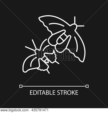 Butterflies Of Singapore White Linear Icon For Dark Theme. National Insect. Asian Butterfly Species.