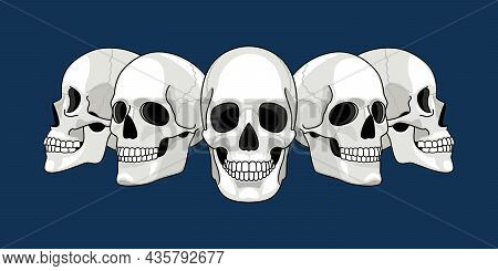 Skull Head Profile. Human Skulls Profiles Picture, Front And Side Scull Bones, Skeleton Faces, Diffe